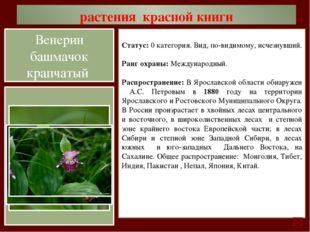 растения красной книги Статус: 1 категория. Вид, находящийся под угрозой исче