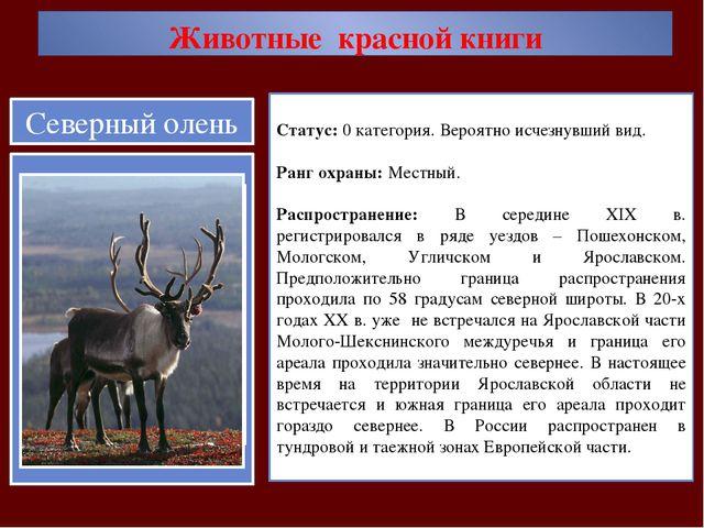 Животные красной книги Статус: 0 категория. Вероятно исчезнувший вид. Ранг ох...