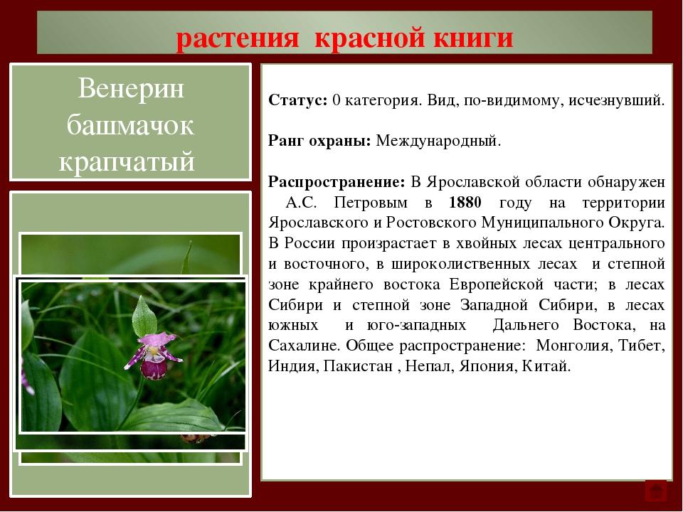 растения красной книги Статус: 1 категория. Вид, находящийся под угрозой исче...