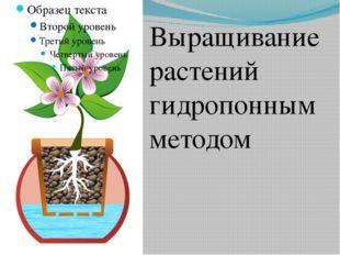 Выращивание растений гидропонным методом Выращивание растений гидропонным мет