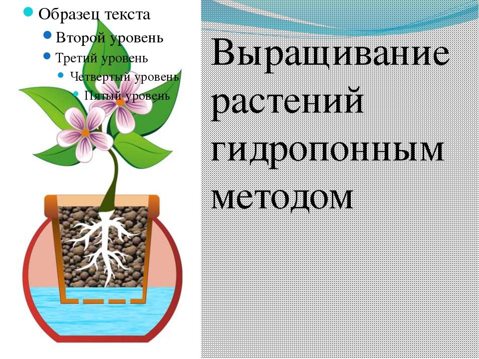 Выращивание растений гидропонным методом Выращивание растений гидропонным мет...