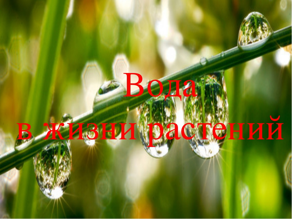 Вода в жизни растений Вода в жизни растений