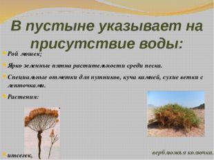 В пустыне указывает на присутствие воды: Рой мошек; Ярко зеленные пятна расти