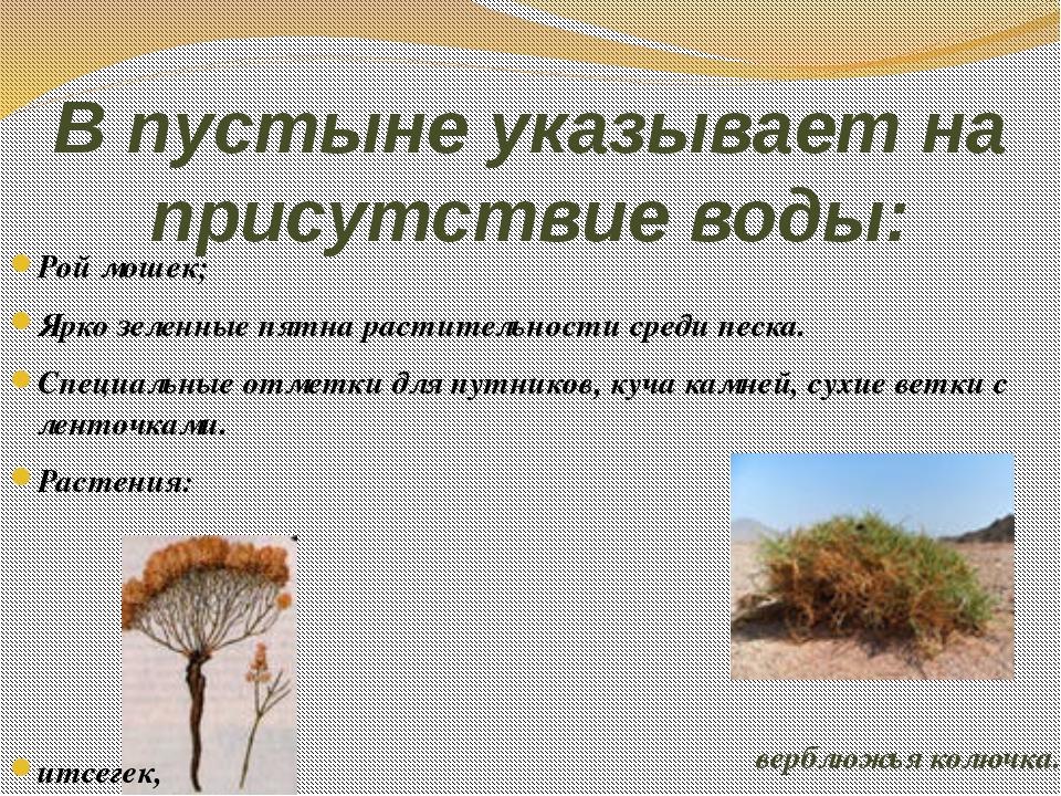 В пустыне указывает на присутствие воды: Рой мошек; Ярко зеленные пятна расти...