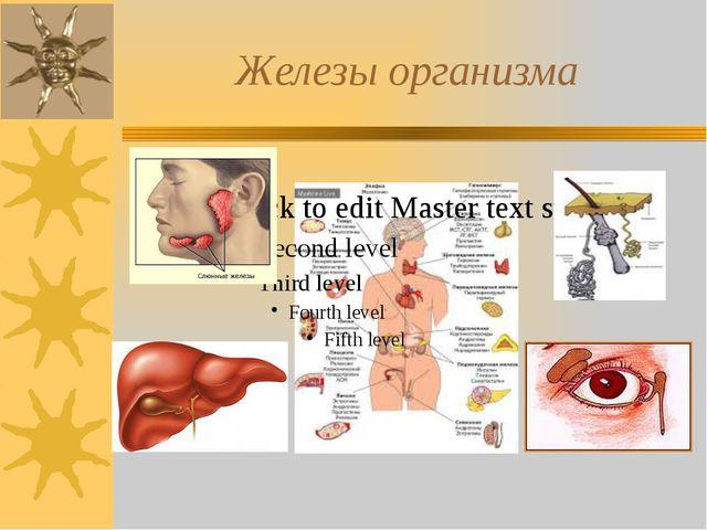 Железы организма