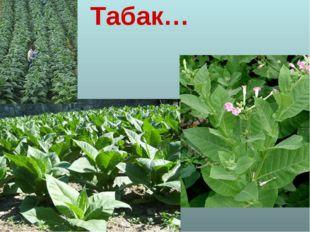 Табак…
