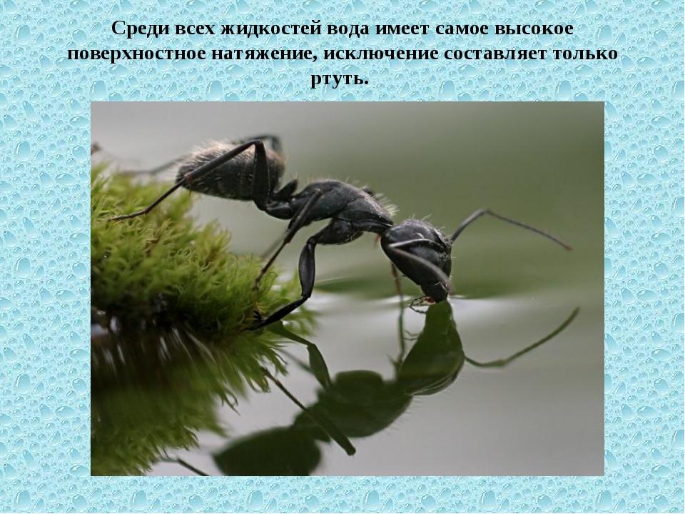 Среди всех жидкостей вода имеет самое высокое поверхностное натяжение, исключ...