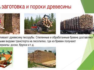Тема урока: заготовка и пороки древесины Заготавливают древесину лесорубы. Сп