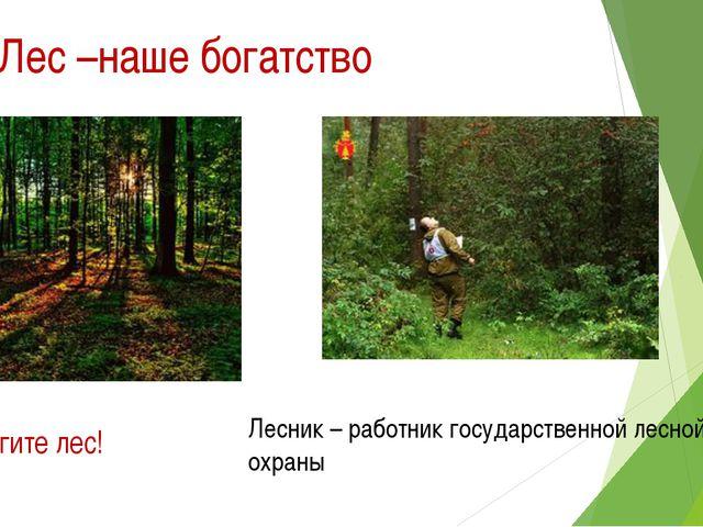 Лес –наше богатство Берегите лес! Лесник – работник государственной лесной ох...