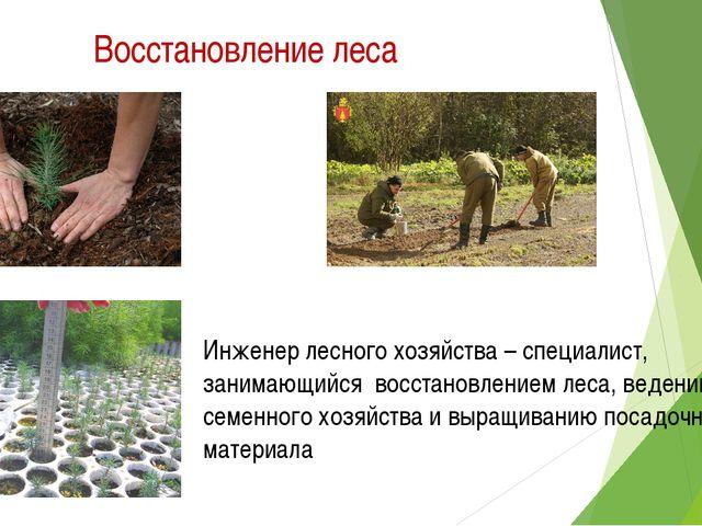 Восстановление леса Инженер лесного хозяйства – специалист, занимающийся восс...