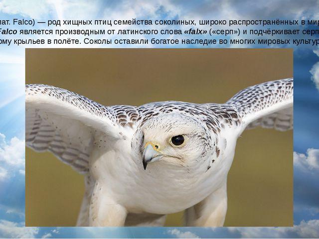Со́колы (лат. Falco) — род хищных птиц семейства соколиных, широко распростра...