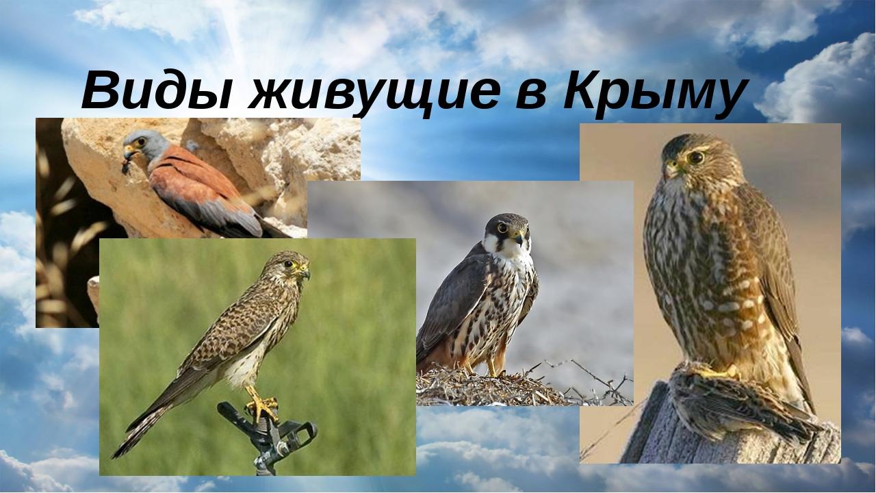 Виды живущие в Крыму
