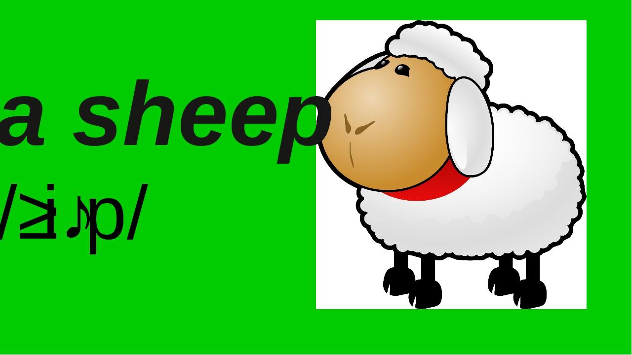 By Nooshin ShahMansoori a sheep /ʃiːp/