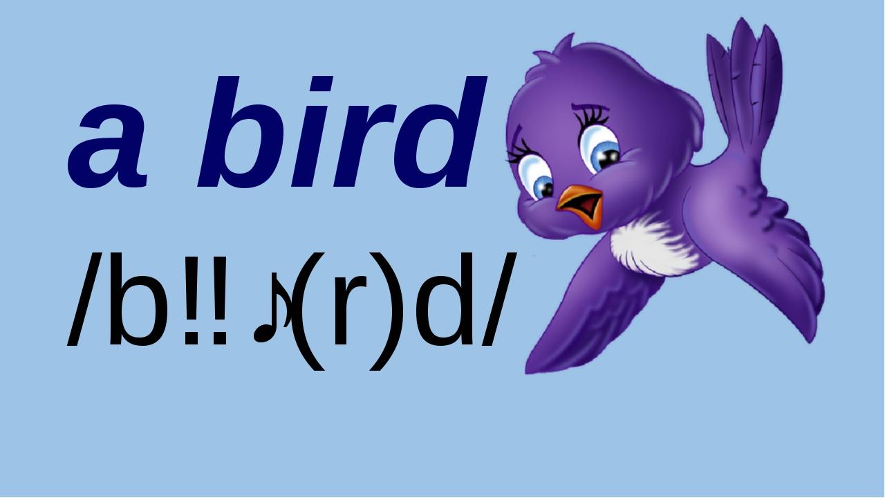 By Nooshin ShahMansoori a bird /bɜː(r)d/
