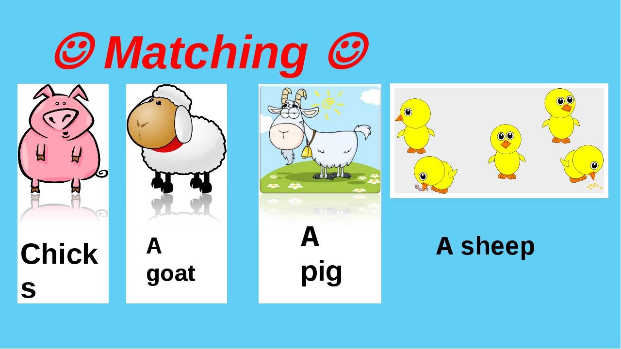  Matching  By Nooshin ShahMansoori Chicks A goat A pig A sheep