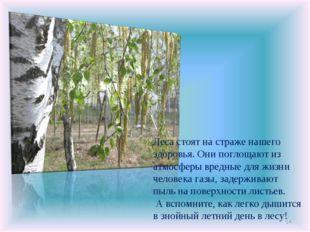 * Леса стоят на страже нашего здоровья. Они поглощают из атмосферы вредные дл