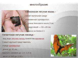 многообразие Свиноносая летучая мышь – самая маленькая среди современных руко