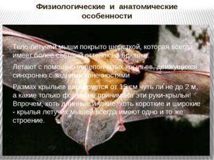 Физиологические и анатомические особенности Тело летучей мыши покрыто шерстко