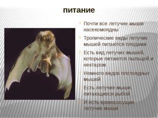 питание Почти все летучие мыши насекомоядны Тропические виды летучих мышей пи