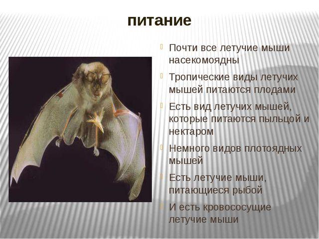 питание Почти все летучие мыши насекомоядны Тропические виды летучих мышей пи...