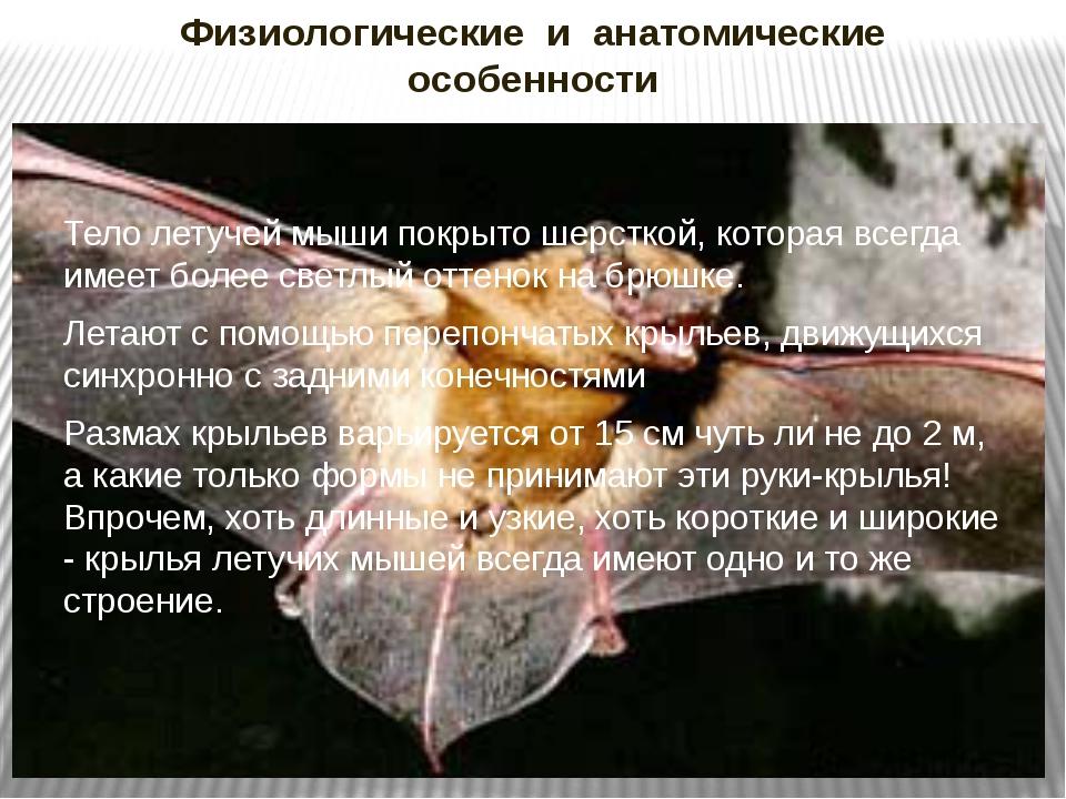 Физиологические и анатомические особенности Тело летучей мыши покрыто шерстко...