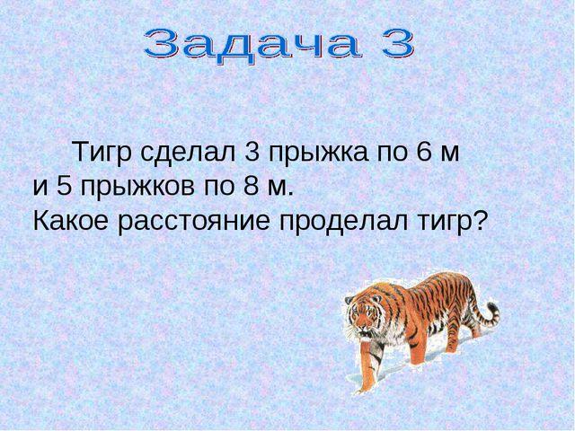 Тигр сделал 3 прыжка по 6 м и 5 прыжков по 8 м. Какое расстояние проделал ти...