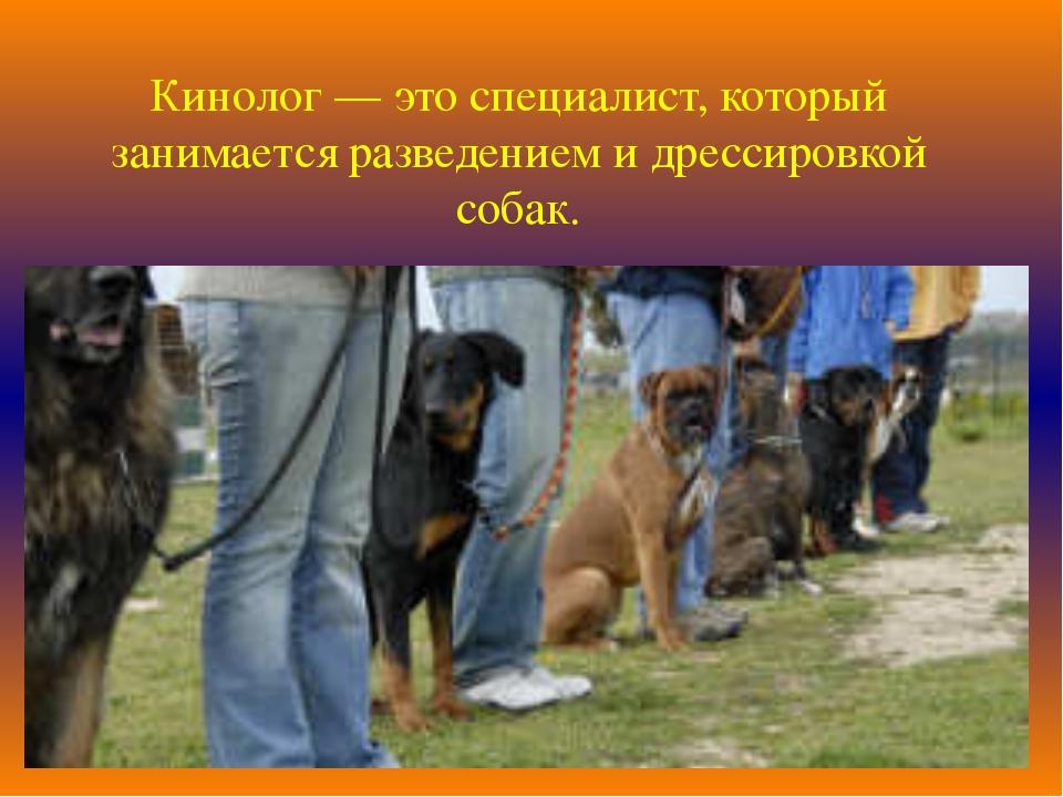 Кинолог — это специалист, который занимается разведением и дрессировкой собак.