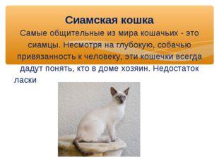 Сиамская кошка Самые общительные из мира кошачьих - это сиамцы. Несмотря на