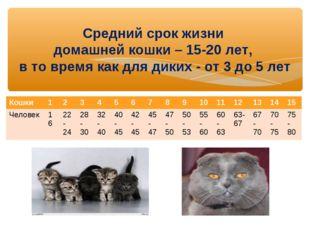 Средний срок жизни домашней кошки – 15-20 лет, в то время как для диких - от