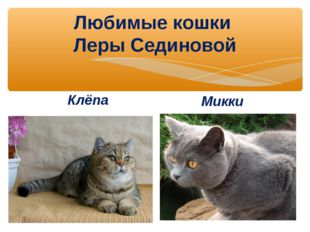 Любимые кошки Леры Сединовой Клёпа Микки