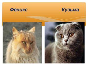 Феникс Кузьма