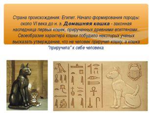 Страна происхождения: Египет. Начало формирования породы: около VI века до н.