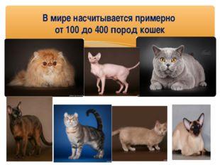 В мире насчитывается примерно от 100 до 400 пород кошек