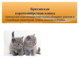 Британская короткошёрстная кошка Британская короткошерстная кошка обладает