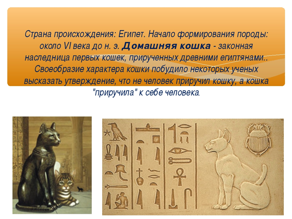 Страна происхождения: Египет. Начало формирования породы: около VI века до н....