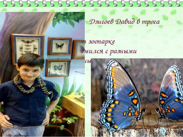 Дзигоев Давид в трога тельном зоопарке познакомился с разными животными