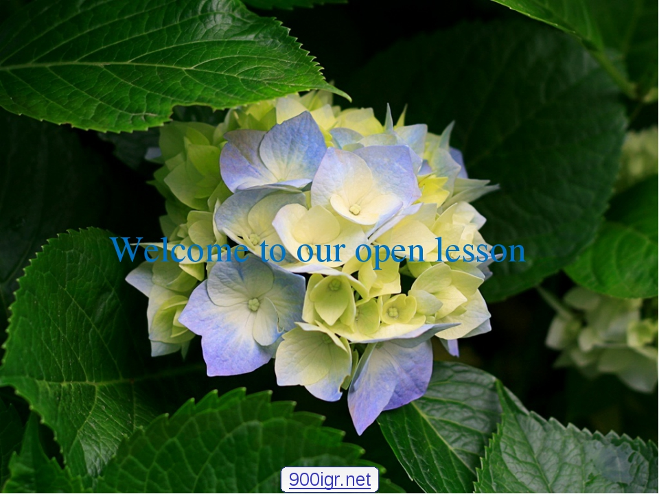 Welcome to our open lesson 900igr.net
