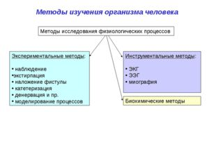 Методы изучения организма человека Экспериментальные методы: наблюдение эксти