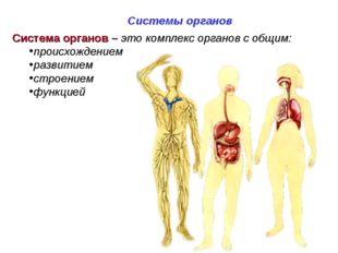 Система органов – это комплекс органов с общим: происхождением развитием стро