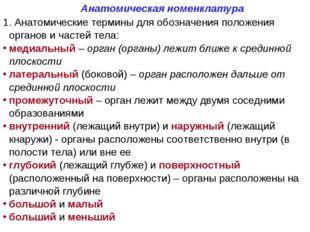 Анатомическая номенклатура 1. Анатомические термины для обозначения положения