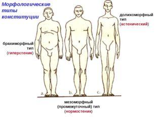 мезоморфный (промежуточный) тип (нормостеник) Морфологические типы конституци