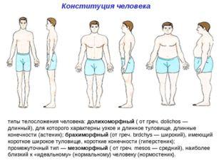 Конституция человека типы телосложения человека: долихоморфный ( от греч. dol