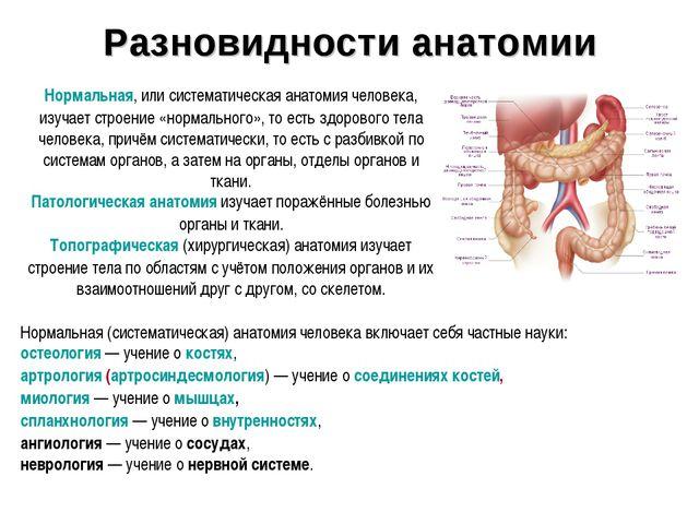 Разновидности анатомии Нормальная, или систематическая анатомия человека, изу...