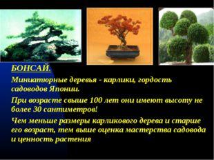 БОНСАЙ. Миниатюрные деревья - карлики, гордость садоводов Японии. При возрас