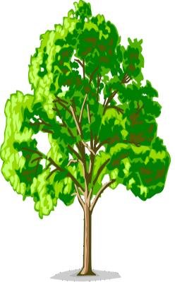 Скачать Картинки деревья для детей 4