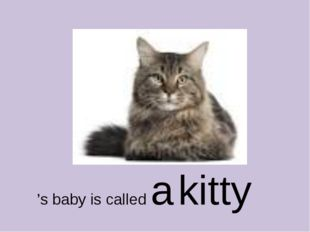 's baby is called a kitty