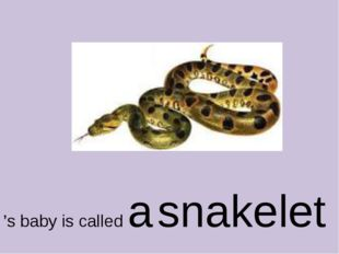 's baby is called a snakelet