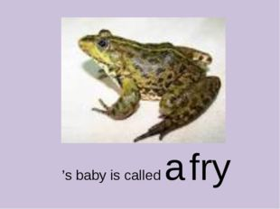 's baby is called a fry