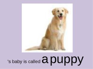 's baby is called a puppy