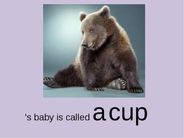 's baby is called a cup